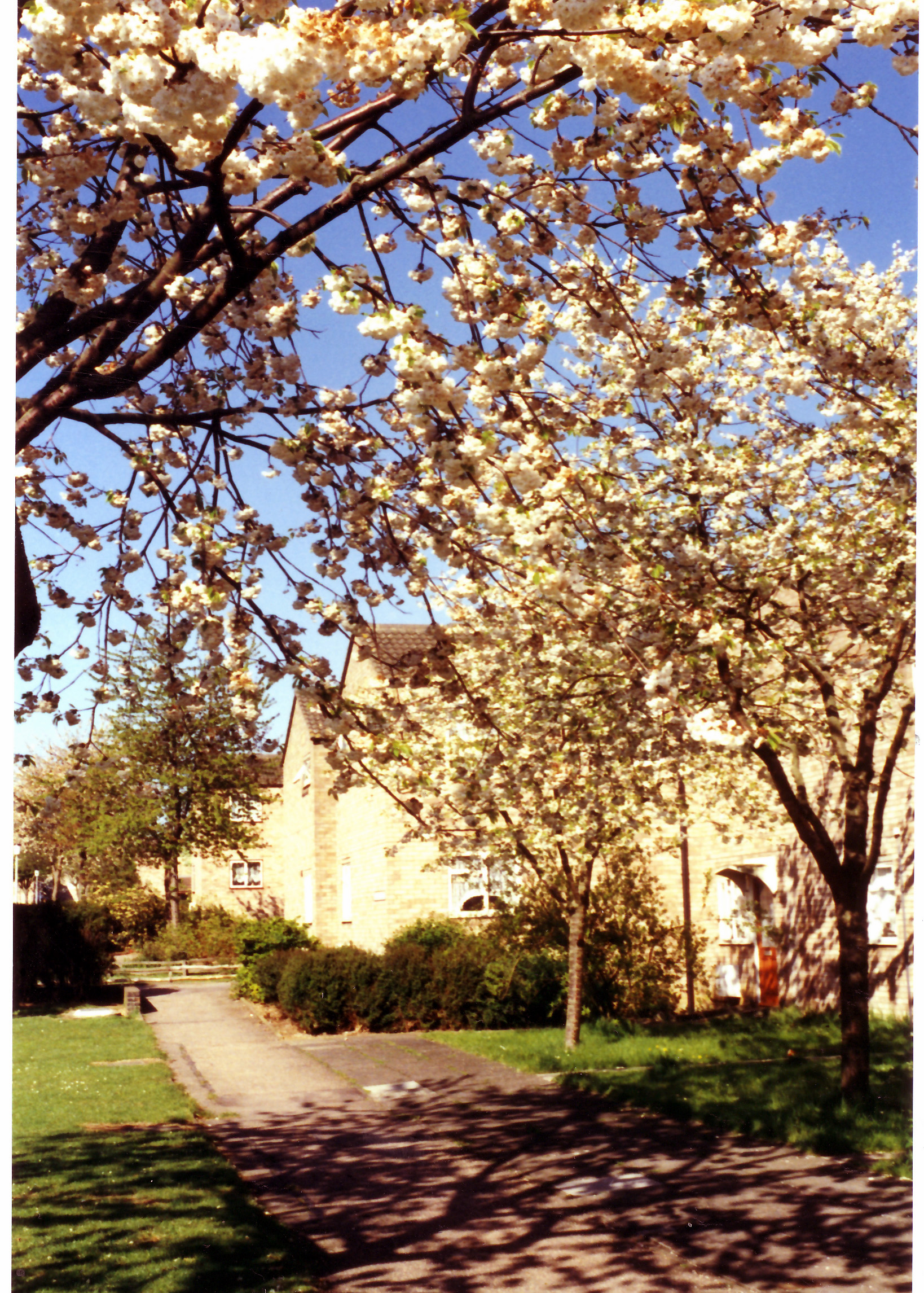 Court two in Spring 1991